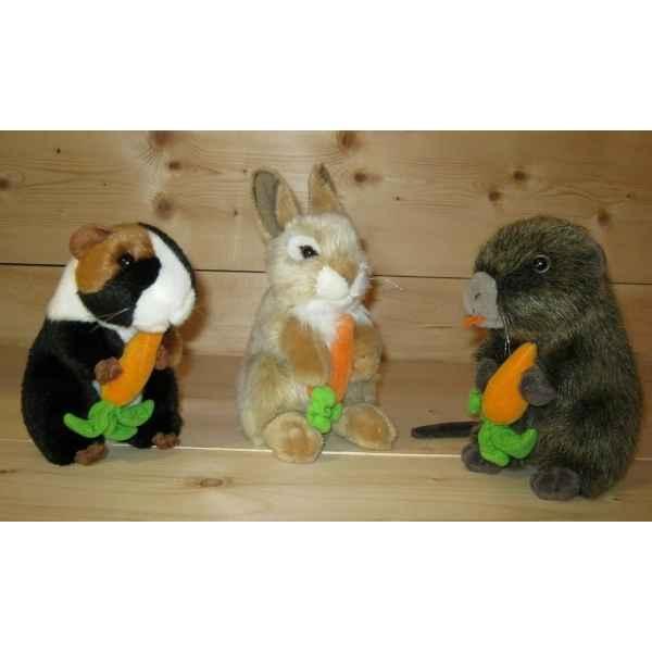 Achat de carottes sur id e d coration vitrine magasin for Idee decoration vitrine