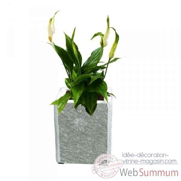 Achat de plante sur id e d coration vitrine magasin for Achat plante