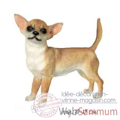 Chien Chihuahua poils courts LP1354