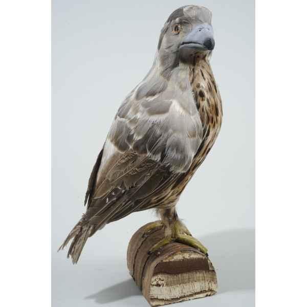 oiseau proie plume sur support kaemingk dans animaux decor noel de d coration noel a. Black Bedroom Furniture Sets. Home Design Ideas