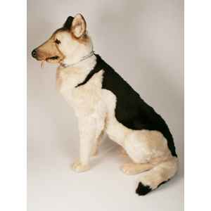 Peluche assise berger allemand 90 cm Piutre -2222